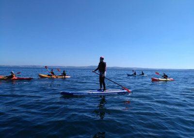 paddle6